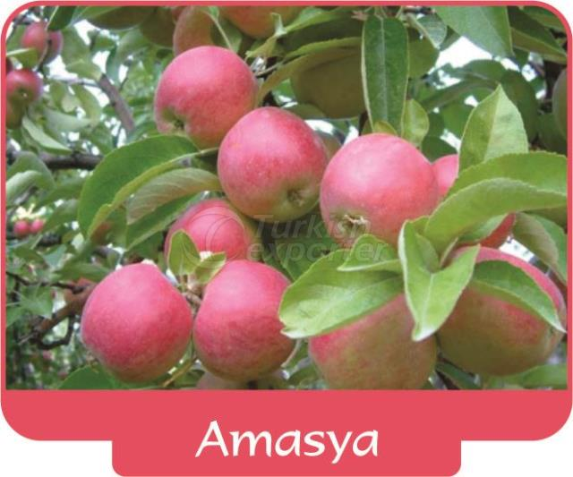 Яблоко Амасья