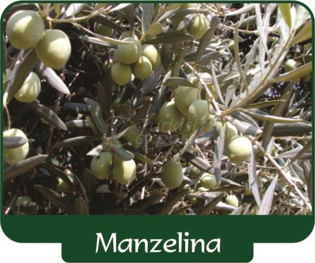 Оливки Manzelina
