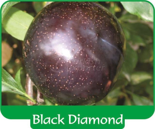 Слива Black Diamond
