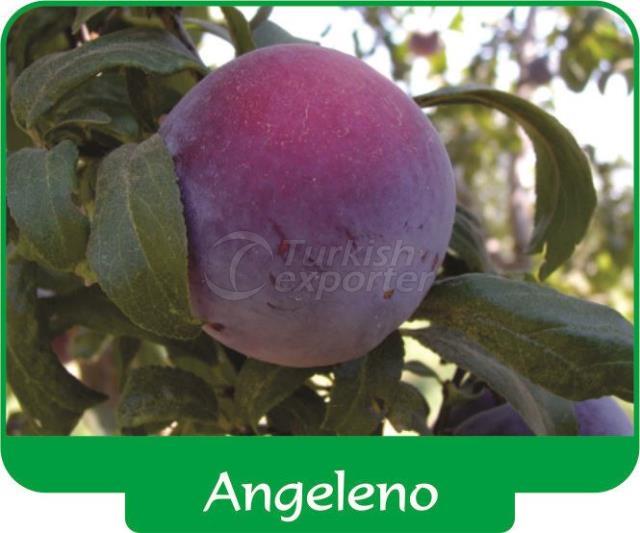 Слива Angeleno