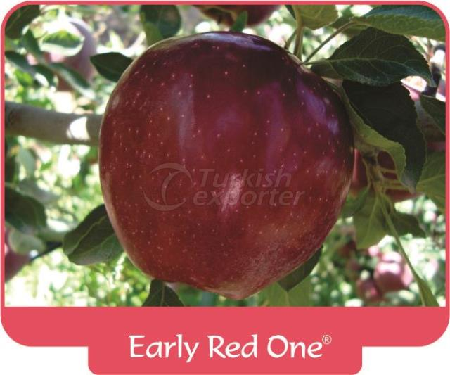 Яблоко Early Red One