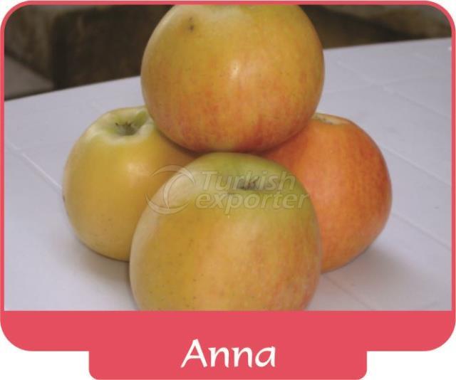 Яблоко Anna