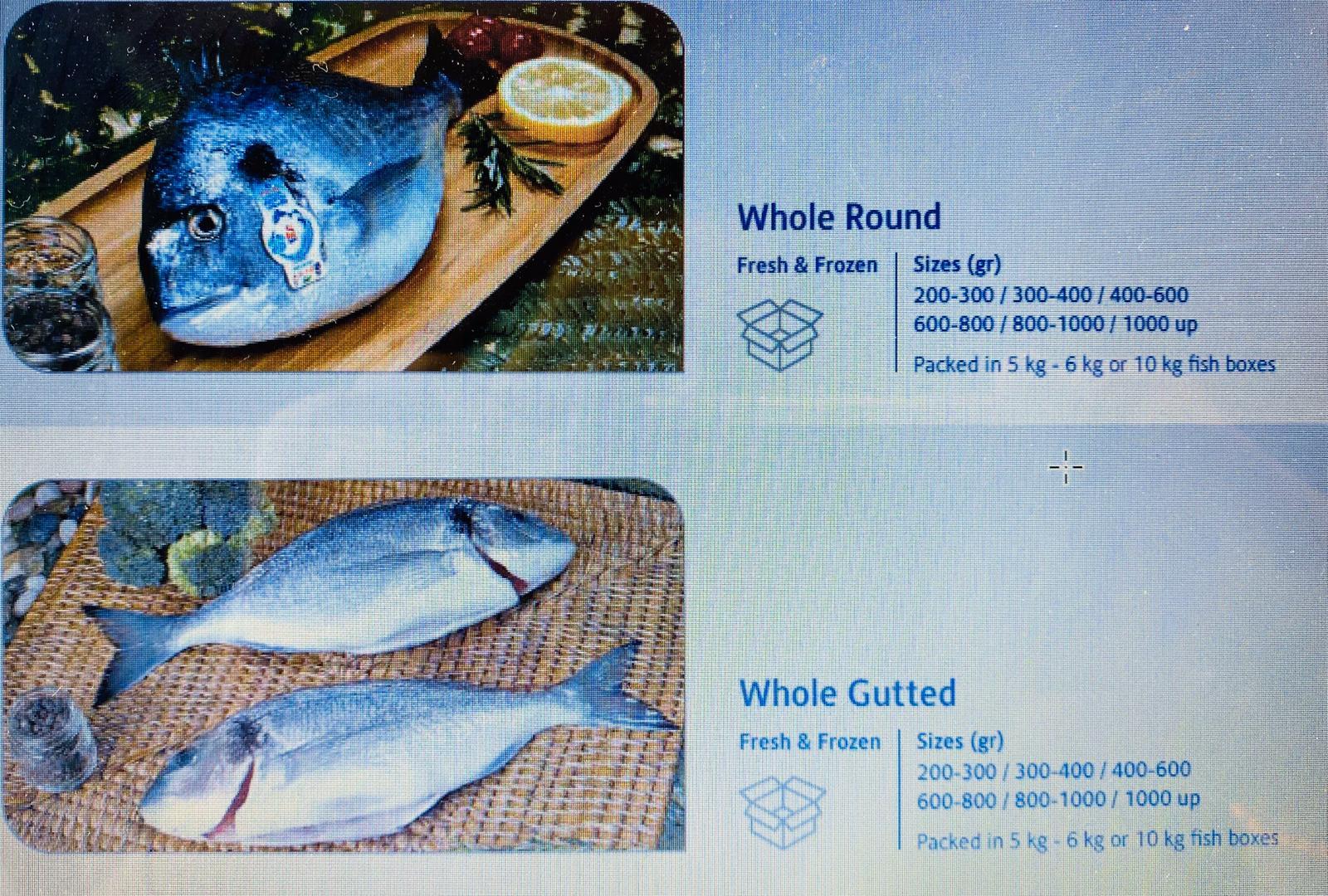 Freezed&Fresh Fish