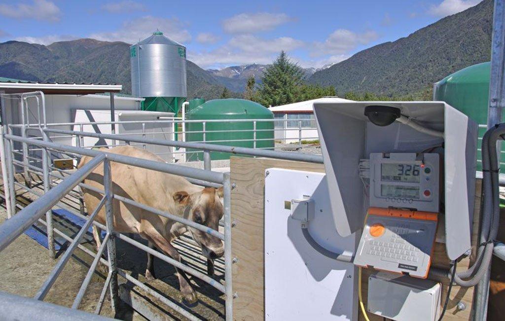 Livestock Animal Scale