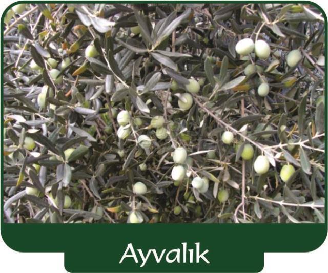 Оливки Ayvalik