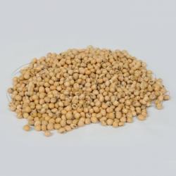 Feijão de soja de origem etíope