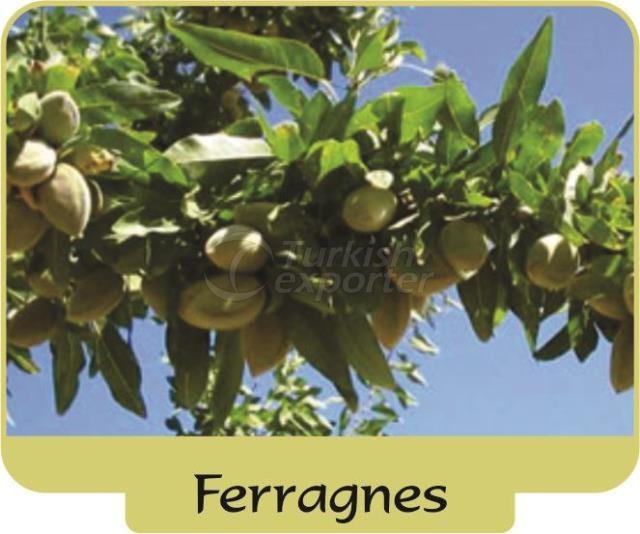 Миндаль Ferragnes
