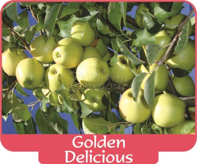 Яблоко Golden Delicious