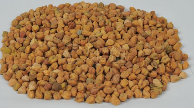 Origem etíope Desi Chick Peas
