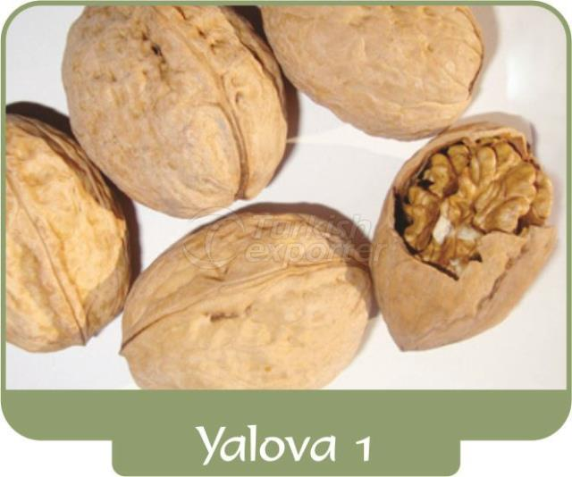 Грецкий орех Ялова 1