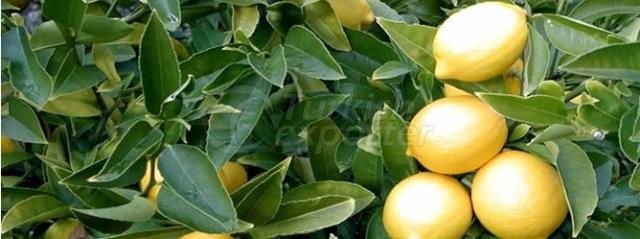 Lamas Lemon