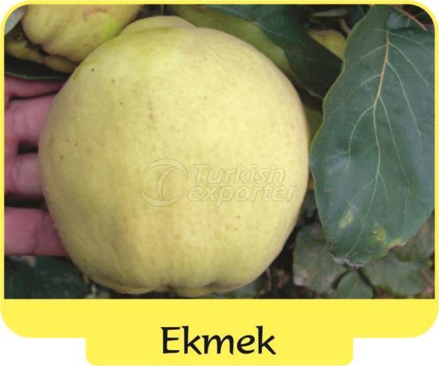 Айва Экмек