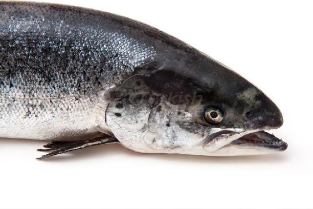 Black Sea Salmon