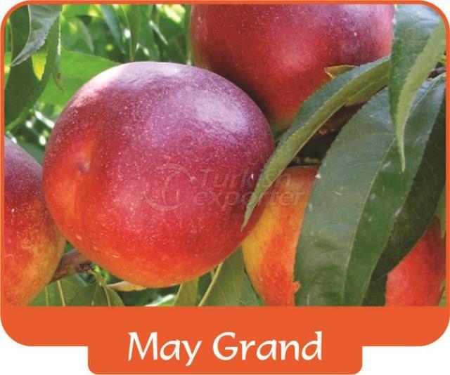 Нектарин May Grand