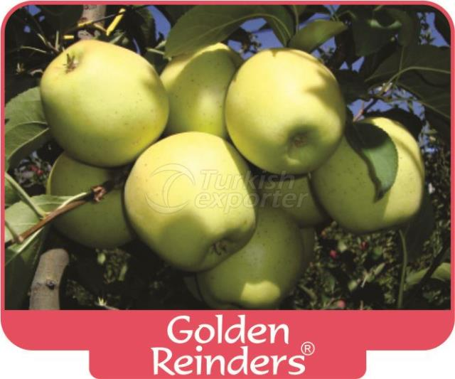 Яблоко Golden Reinders