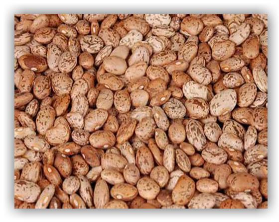 Light Speckled Beans