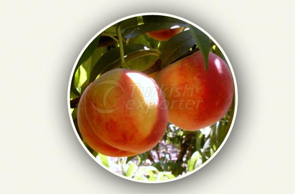 Персиковый саженец