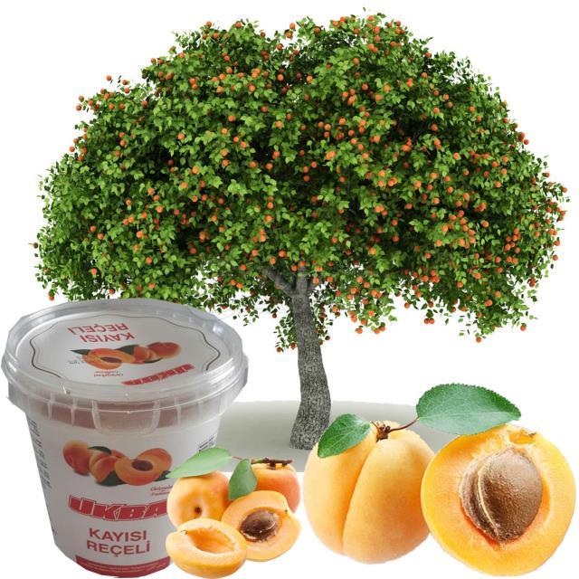 Confitures de fruits
