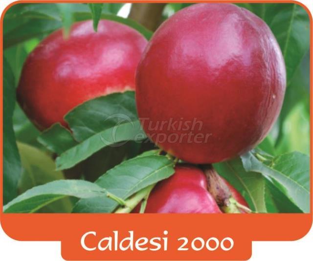 Нектарин Caldesi 2000