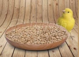 Canary Seeds