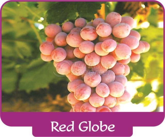 Виноград Red Globe