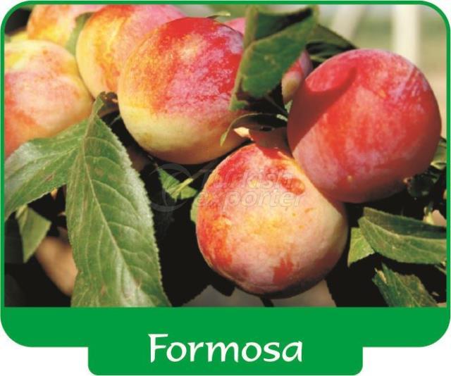 Слива Formosa
