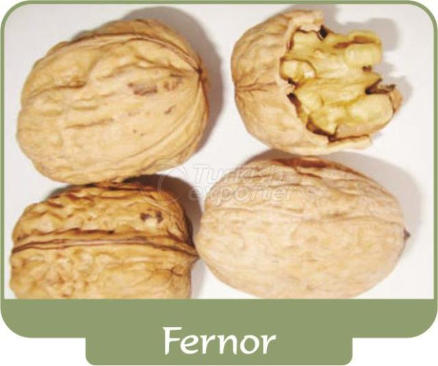 Грецкий орех Fernor